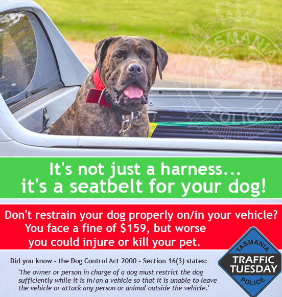 Traffic Tuesday graphic - restrain dogs on utes