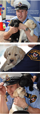 Tasmania Police Charity Trust image of Constable Leigh Devine with Royal Guide Dog puppies.